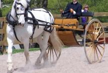 horse-daniel
