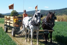 horse-percheron-team2