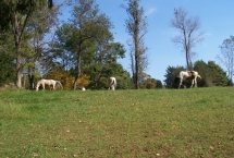 location-farm9