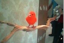 bird-canary-target3