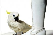 bird-sulphur-crested-cockatoogypsy
