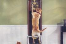 bjs-wholesale-cat-dog