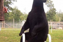 black-bear-jenny-6