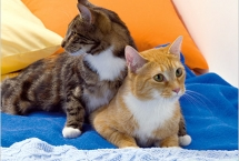 cats-snickers-and-peaches-new-yorktimes-magazine