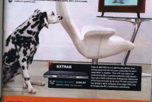 dalmatian-pennydetails-mag
