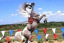 horse-arabian-levade