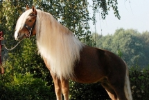 horse-black-forest-rico