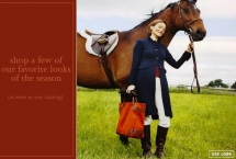 horse-dutch-warmblood-harry-j-crew_