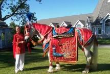 horse-percheron-kate-indian-wedding