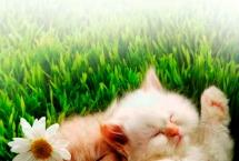 kitten-persian_harper-collins0091