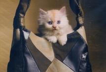 kitten-photoshoot