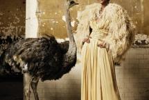 ostrich-harpers-bazaar