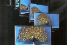 peacock-sharp-aquos